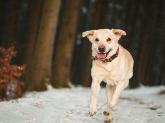 Silvester Ferienhaus mit Hund in Tschechien