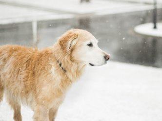 Österreich an Silvester mit Hund